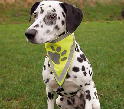 Trixie Safer Life Halstuch für Hunde