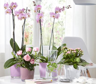 bertopf aus glas f r orchideen 12 cm rund dehner garten center. Black Bedroom Furniture Sets. Home Design Ideas