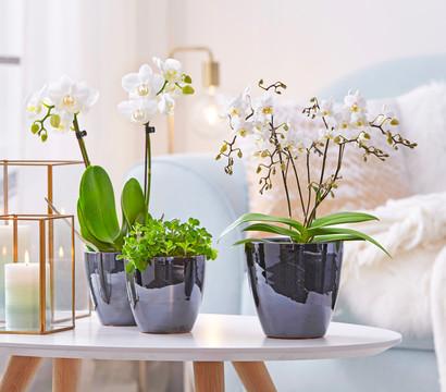 bertopf aus keramik 15 cm rund dehner garten center. Black Bedroom Furniture Sets. Home Design Ideas