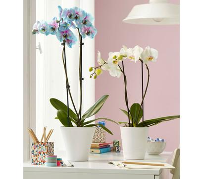bertopf tina f r orchideen 13 cm dehner garten center. Black Bedroom Furniture Sets. Home Design Ideas