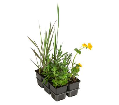 Wasserpflanzen-Paket 'Libelle', verschiedene Sorten