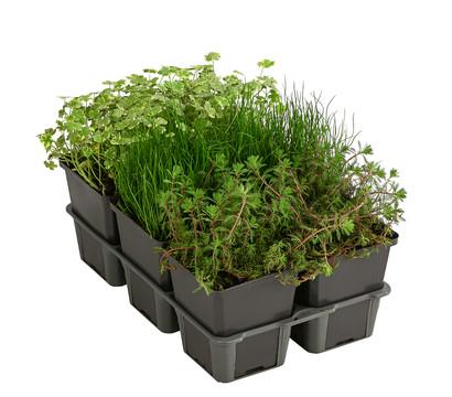Wasserpflanzen-Paket 'Sauerstoff', verschiedene Sorten