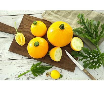 Zucchini 'One Ball', Pflanze