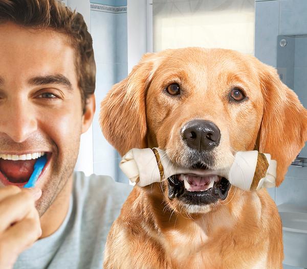 8in1 Kausnacks Delights Dental Kauknochen