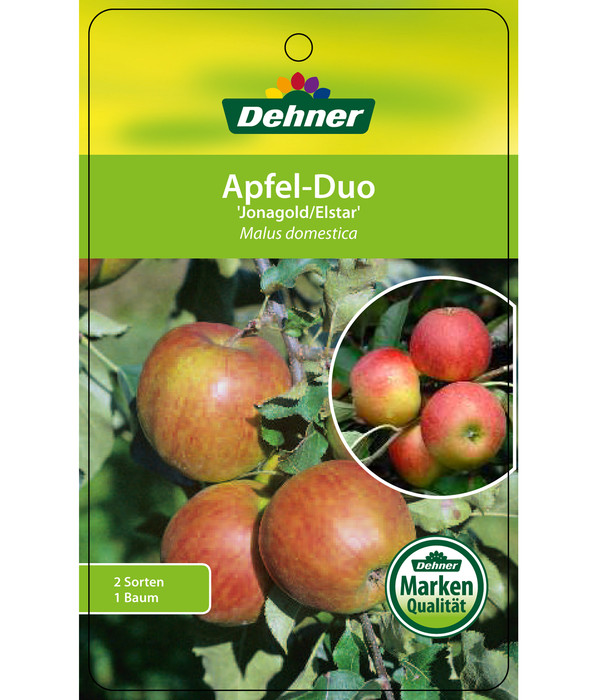 Apfel-Duo 'Jonagold'/'Elstar'