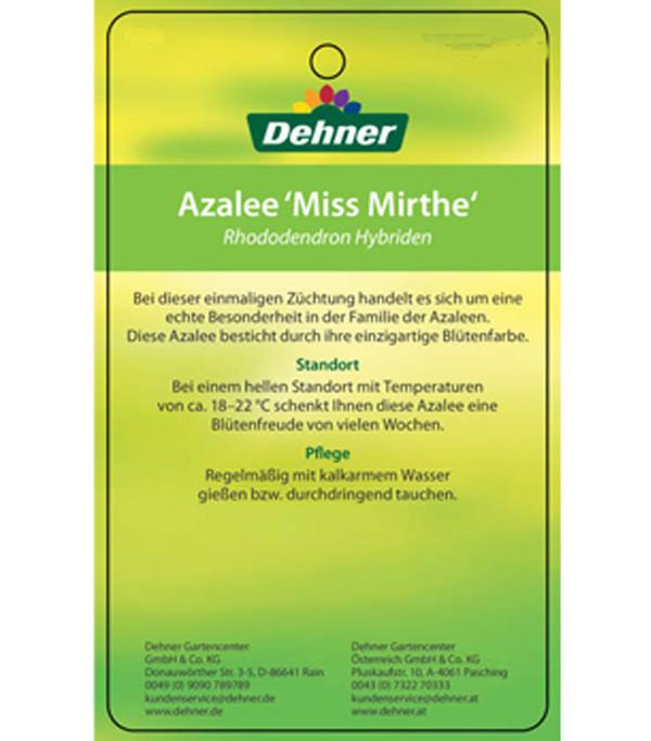 Azalee 'Miss Mirthe'