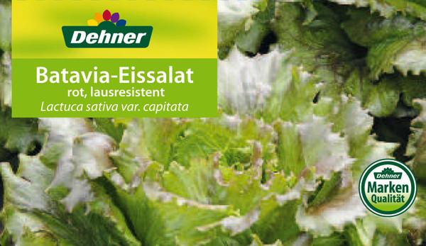 Batavia-Eissalat, rot, lausresistent, 12er Schale