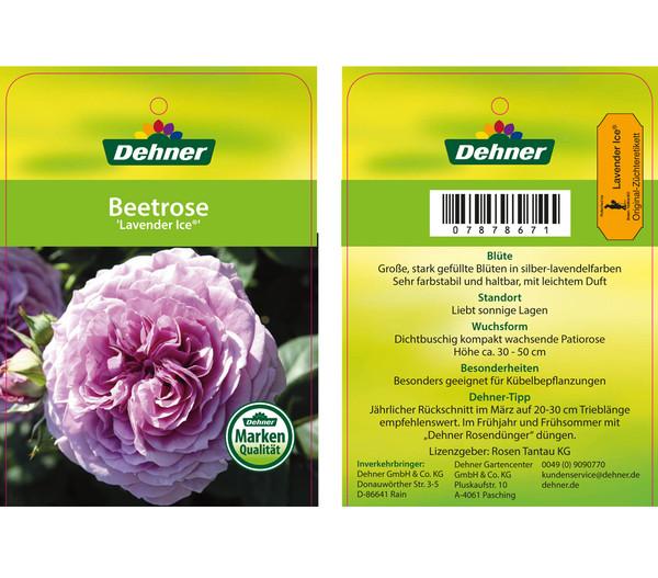 Beetrose 'Lavender Ice'®
