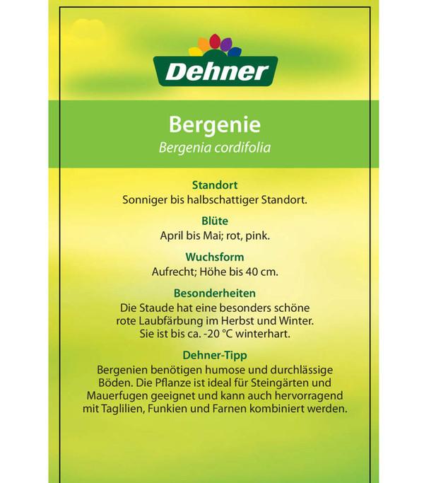 Bergenie