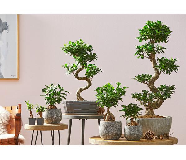 Übertopf 'Ficus' aus Keramik