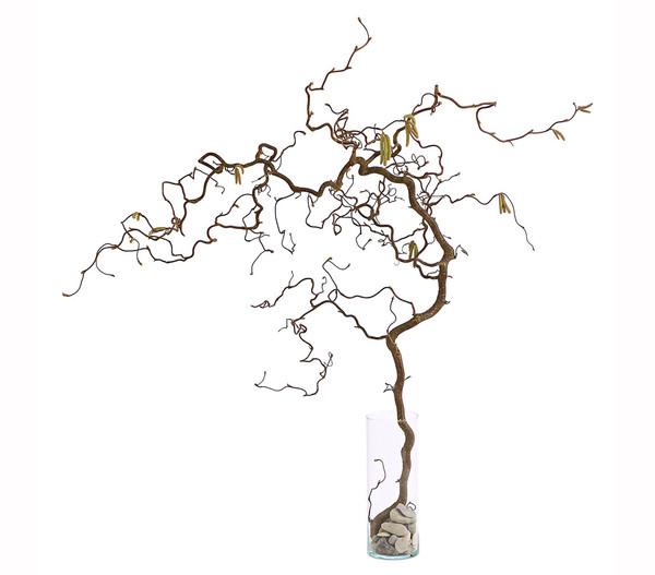 Bio Korkenzieherhasel, natur