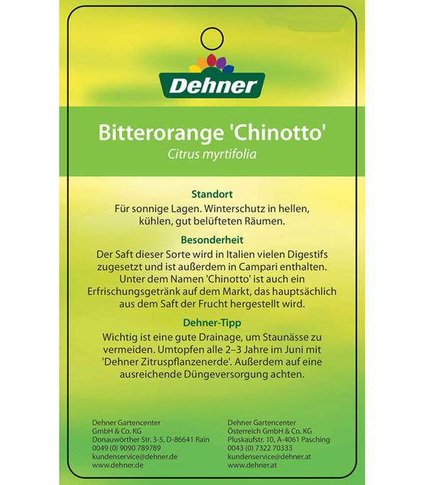 Bitterorange 'Chinotto'