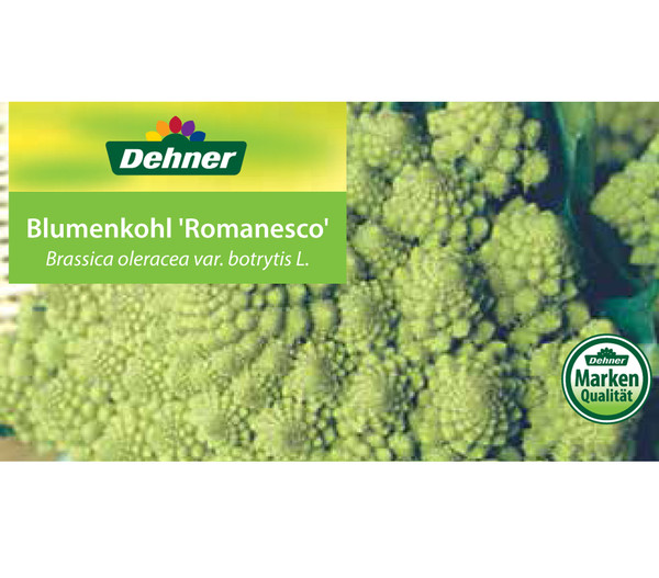 Blumenkohl 'Romanesco', 12er Schale