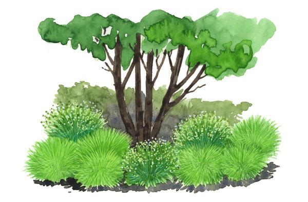 Bodendeckergräser-Paket 'Grüne Oase'