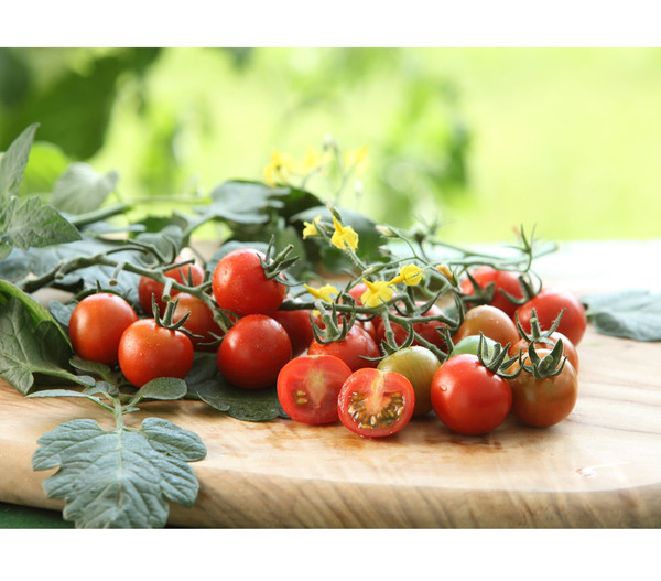 Cherrytomate 'Philovita'