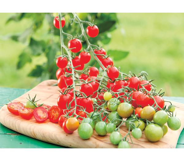 Cherrytomate