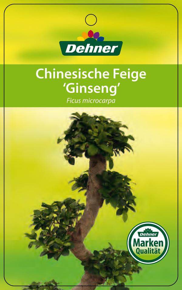 Chinesische Feige 'Ginseng'
