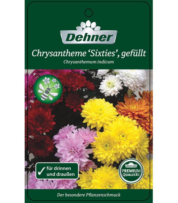 chrysantheme 39 sixties 39 gef llt dehner. Black Bedroom Furniture Sets. Home Design Ideas
