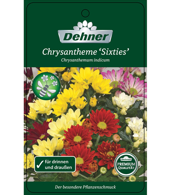 Chrysantheme 'Sixties'