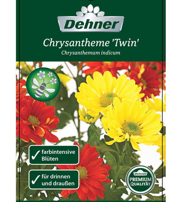 Chrysantheme 'Twin', gelb-orange