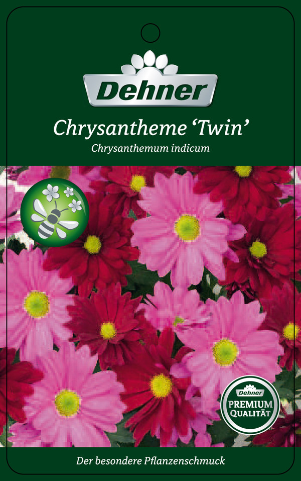 Chrysantheme 'Twin', rosa-lila