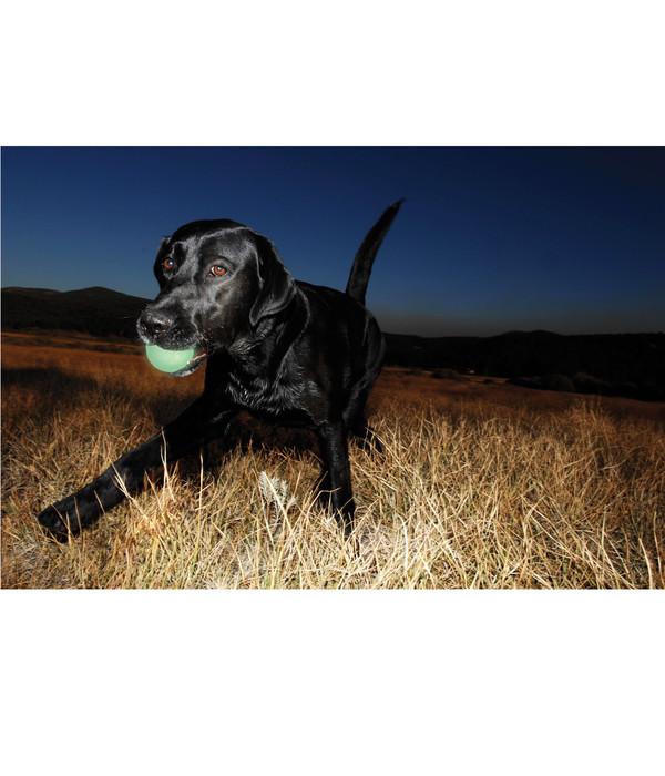 Chuckit!® Hundespielzeug Fetch Medley Ball Set S