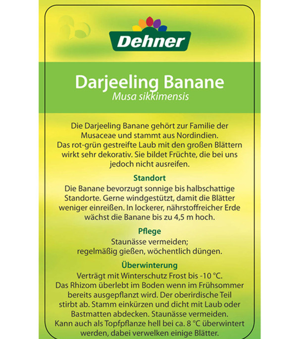 Darjeeling-Banane