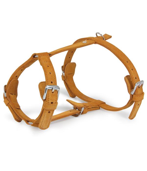 Das Lederband Hundegeschirr Style Toronto Cognac