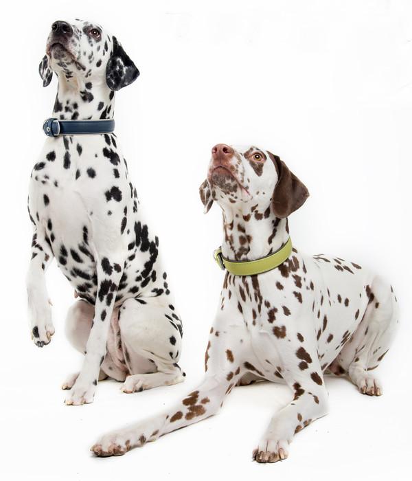 Das Lederband Hundehalsband Style Amsterdam Navy/Grey