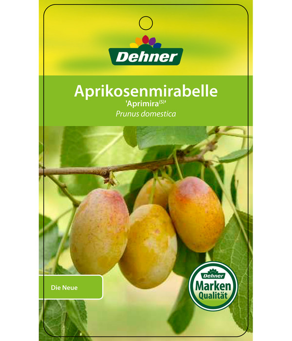 Dehner Aprikosenmirabelle 'Aprimira'