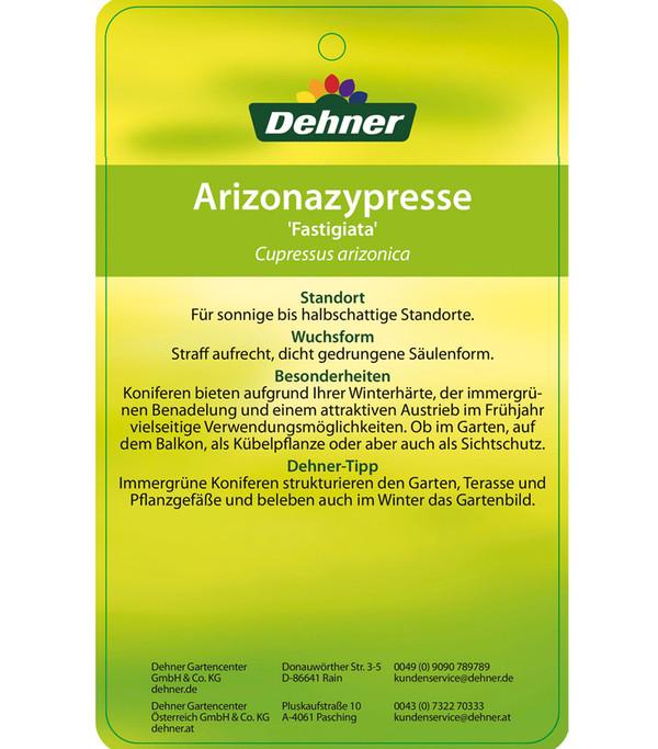 Dehner Arizona-Säulen-Zypresse 'Glauca'