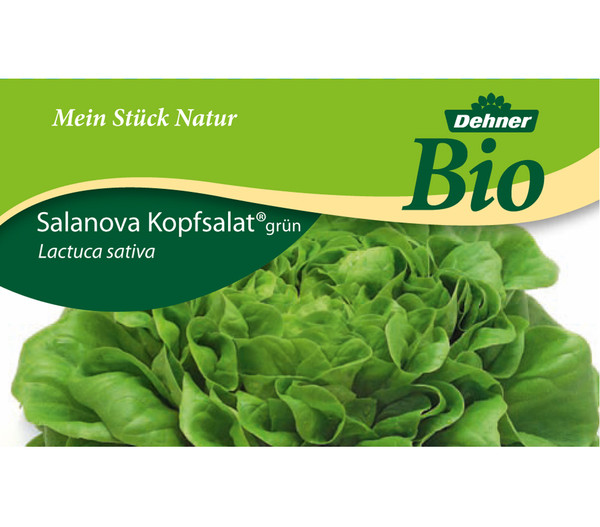 Dehner Bio Salanova® Kopfsalat, 6er Schale