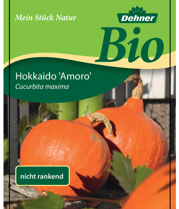 Dehner Bio Speisekürbis Hokkaido, Pflanze