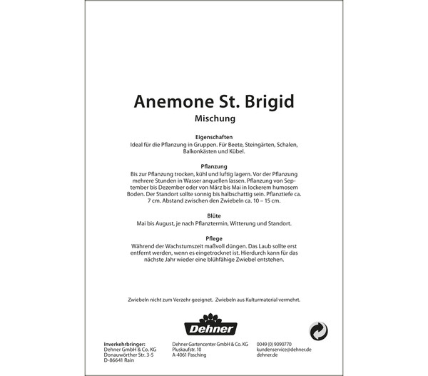 Dehner Blumenzwiebel Anemonen St. Brigid 'Mischung'