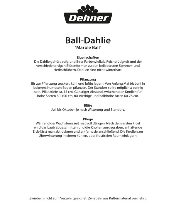 Dehner Blumenzwiebel Ball-Dahlie 'Marble Ball'