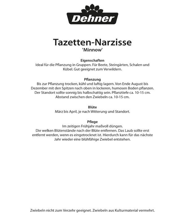 Dehner Blumenzwiebel Botanische Narzisse 'Minnow'