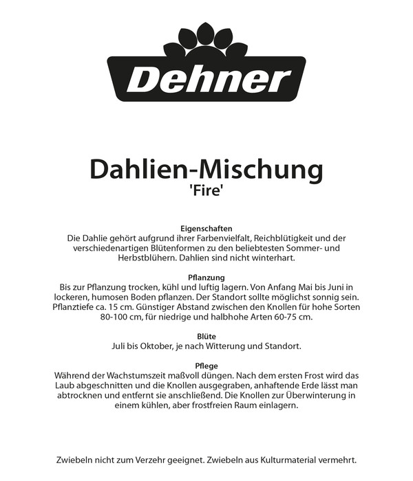Dehner Blumenzwiebel Dahlien-Mischung 'Fire'