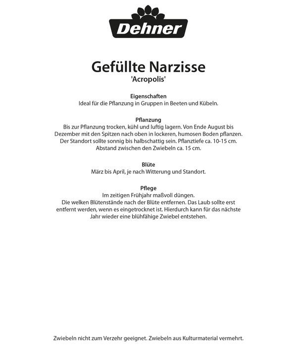 Dehner Blumenzwiebel Gefüllte Narzisse 'Acropolis'