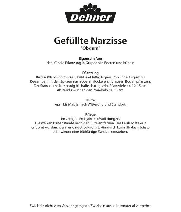 Dehner Blumenzwiebel Gefüllte Narzisse 'Obdam'