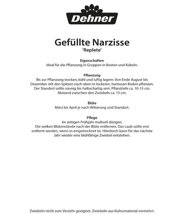 Dehner Blumenzwiebel Gefüllte Narzisse 'Replete'