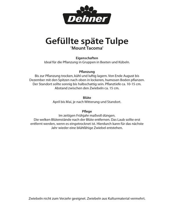 Dehner Blumenzwiebel Gefüllte späte Tulpe 'Mount Tacoma'