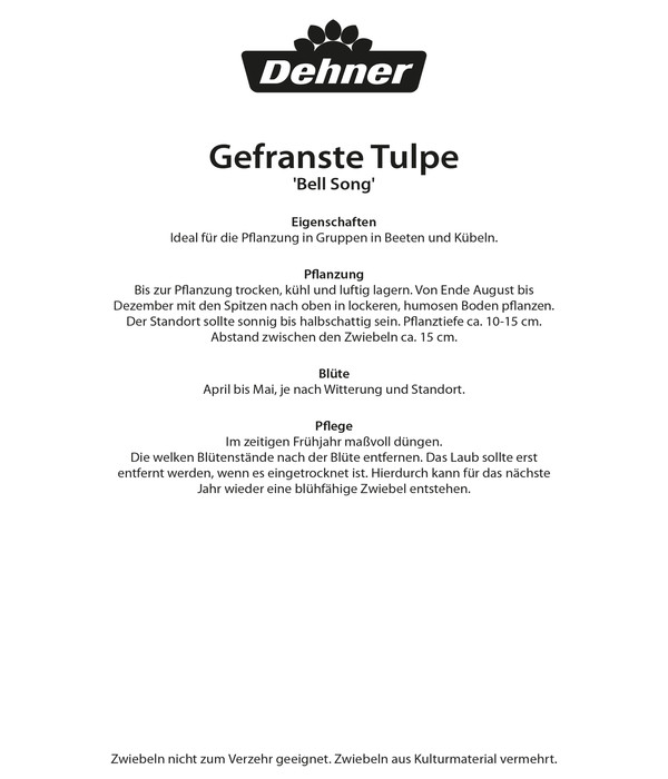 Dehner Blumenzwiebel Gefranste Tulpe 'Bell Song'