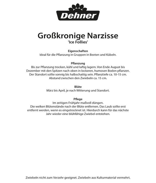 Dehner Blumenzwiebel Großkronige Narzisse 'Ice Follies'