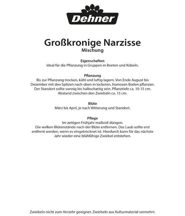 Dehner Blumenzwiebel Großkronige Narzisse Mischung