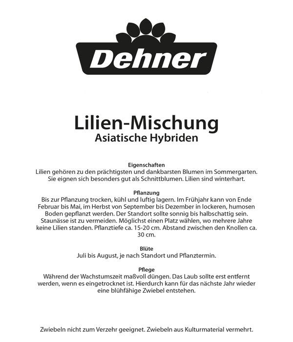 Dehner Blumenzwiebel Lilie 'Midcentury Mischung'