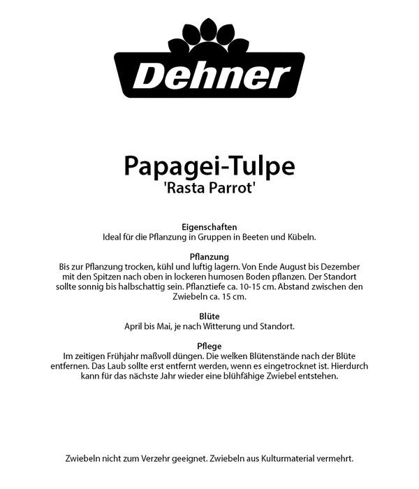 Dehner Blumenzwiebel Papagei-Tulpe 'Rasta Parrot'