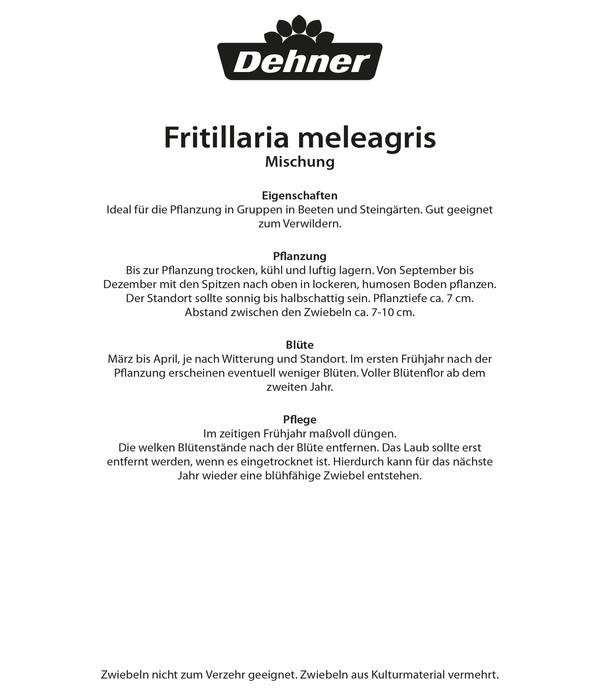 Dehner Blumenzwiebel Schachbrettblume 'Fritillaria meleagris Mischung'