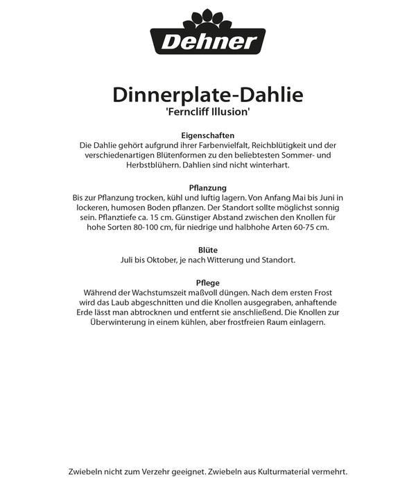 Dehner Blumenzwiebel Schmuck-Dahlie 'Ferncliff Illusion'