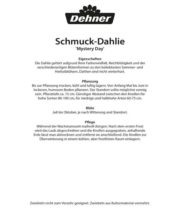 Dehner Blumenzwiebel Schmuck-Dahlie 'Mystery Day'