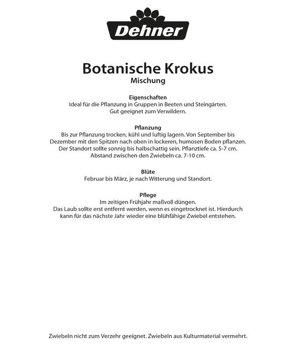 Dehner Blumenzwiebel Wildkrokus Mischung